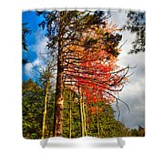 Autumn Color In The Trees Shower Curtain