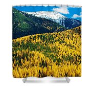 Autumn Color Larch Trees In Pine Tree Shower Curtain