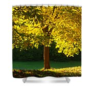 Autumn Colors 10 Shower Curtain