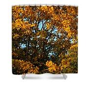 Autumn Colors 11 Shower Curtain