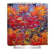 Autumn Colors - 113 Shower Curtain