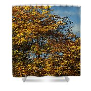 Autumn Colors 5 Shower Curtain
