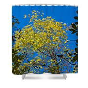 Autumn Colors Against The Sky Shower Curtain