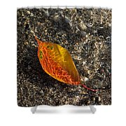 Autumn Colors And Playful Sunlight Patterns - Cherry Leaf Shower Curtain