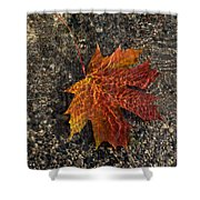 Autumn Colors And Playful Sunlight Patterns - Maple Leaf Shower Curtain