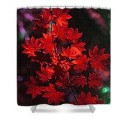 Autumn Colors Early Shower Curtain