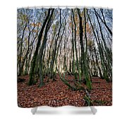 Autumn Colors In The Forrest Shower Curtain
