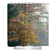 Autumn Cypress Shower Curtain