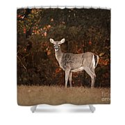 Autumn Doe Shower Curtain