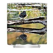 Autumn Duck Reflections Shower Curtain