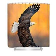 Autumn Eagle Shower Curtain