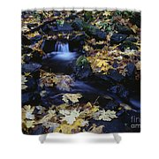 Autumn Fall Colors Starvation Creek State Park Shower Curtain