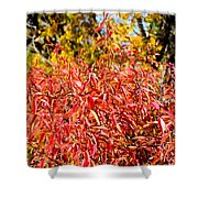 Autumn Flames Shower Curtain