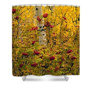 Autumn Forest Colors Shower Curtain
