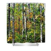 Autumn Forest Detail Shower Curtain