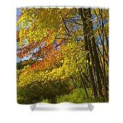 Autumn Forest Scene In West Michigan Shower Curtain