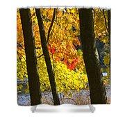 Autumn Forest Scene Shower Curtain