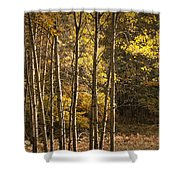 Autumn Forest Scene With Birches In West Michigan Shower Curtain