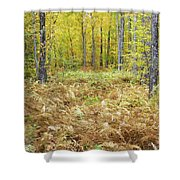 Autumn Forest - White Mountains New Hampshire Shower Curtain