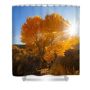 Autumn Golden Birch Tree In The Sun Fine Art Photograph Print Shower Curtain