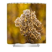 Autumn Goldenrod And A Poser Shower Curtain