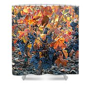 Autumn Grapes Shower Curtain