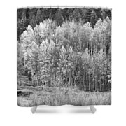 Autumn Grazing Horses Bonanza Bw Shower Curtain by James BO  Insogna