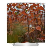 Autumn Harmony 3 Shower Curtain