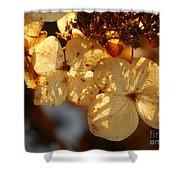 Autumn Hydrangeas I V Shower Curtain