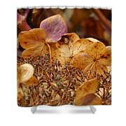 Autumn Hydrangeas V Shower Curtain