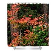 Autumn In Mount Rainier Forest Shower Curtain