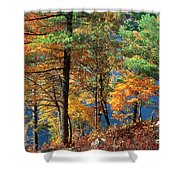 Autumn In New Jersey Shower Curtain