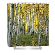 Autumn In The Aspen Grove Shower Curtain