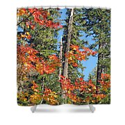 Autumn In The Forest Shower Curtain