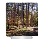 Autumn In The Pines Shower Curtain