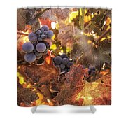 Autumn In The Vineyard Shower Curtain