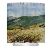 Harvest Time In Napa Valley Shower Curtain