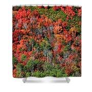 Autumn In The Wasatch Range Shower Curtain