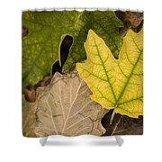 Autumn Is Coming 1 Shower Curtain