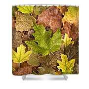 autumn is coming 5 - A carpet of autumn color leaves  Shower Curtain