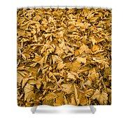 Autumn Leaf Background Shower Curtain