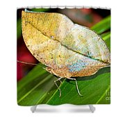 Autumn Leaf Butterfly Shower Curtain