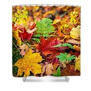 Autumn Leaf Salad Shower Curtain