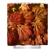 Autumn Leaves 00 Shower Curtain