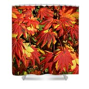 Autumn Leaves 08 Shower Curtain