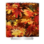 Autumn Leaves 09 Shower Curtain