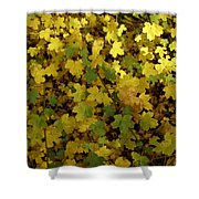 Autumn Leaves 091 Shower Curtain