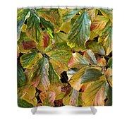 Autumn Leaves 79 Shower Curtain
