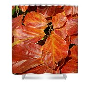 Autumn Leaves 80 Shower Curtain