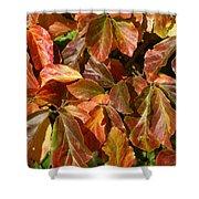 Autumn Leaves 81 Shower Curtain